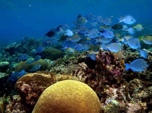 coral_reef_activity
