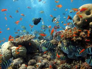 underwater-coral-reef